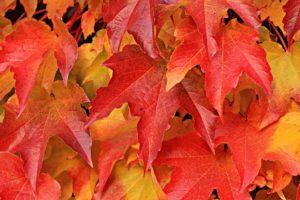 ayurveda autumn